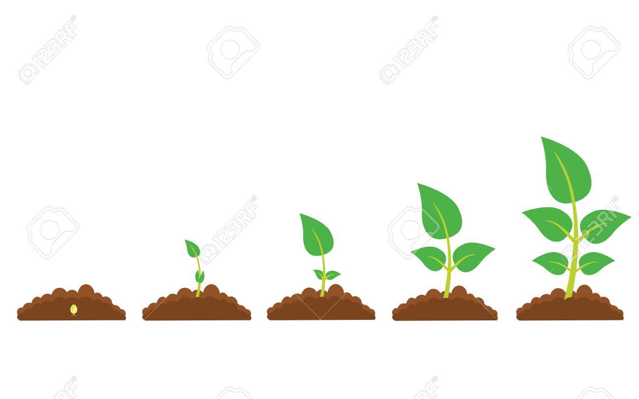 イラストでは生育段階のセットです緑の発芽や栽培の段階新しい生活と