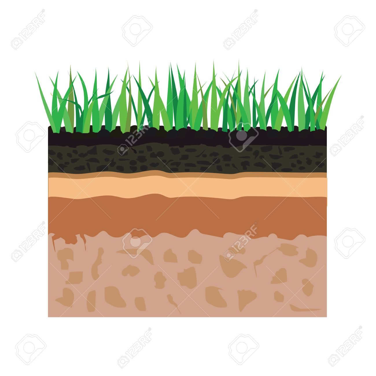 Illustration of diagram for layer of soil nature landscape with illustration of diagram for layer of soil nature landscape with soil tile and grass elements pooptronica Images