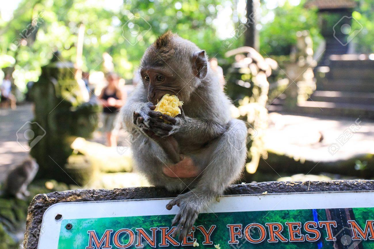 Monkey - 39387447
