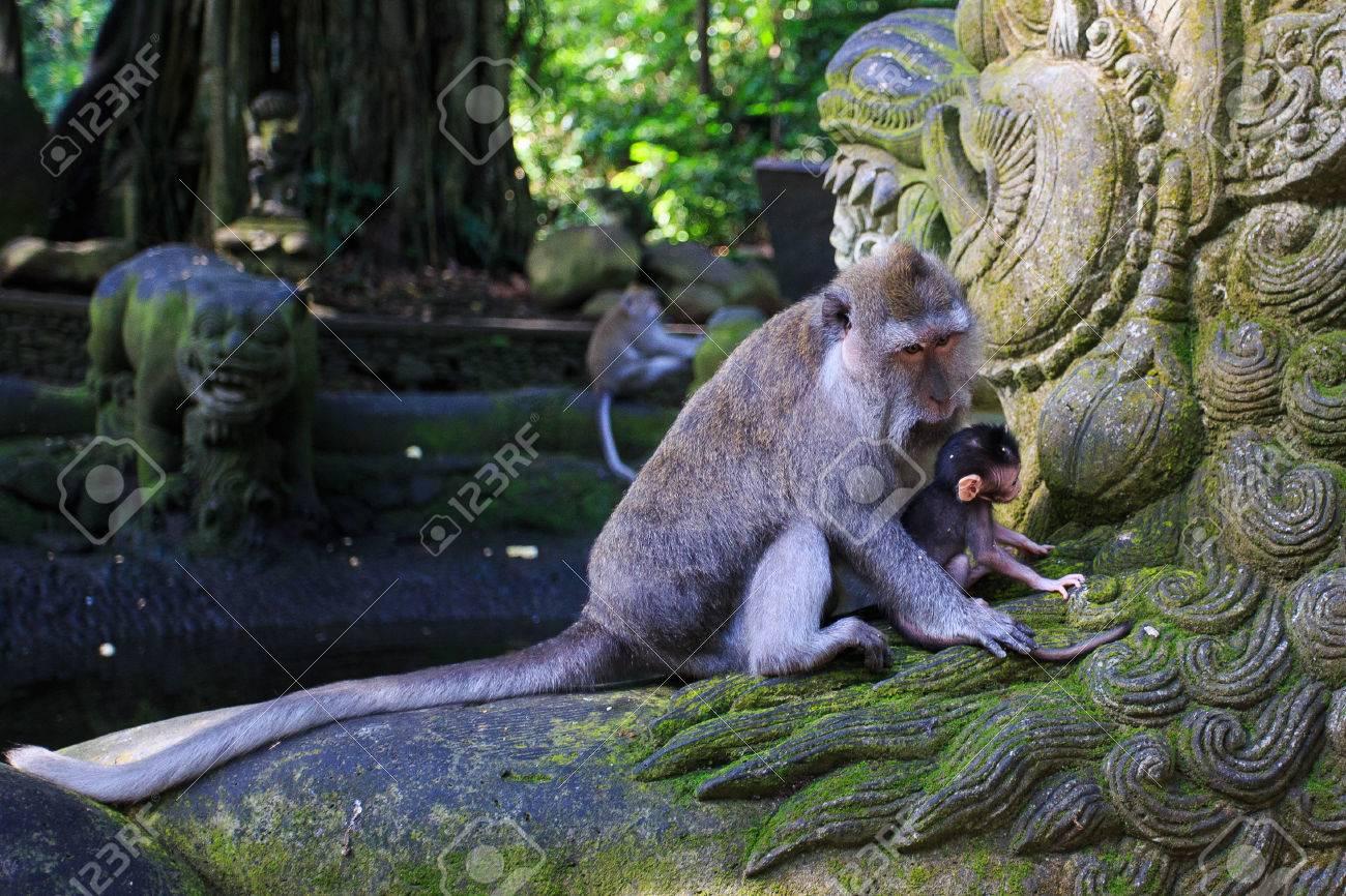 Monkey - 39387448