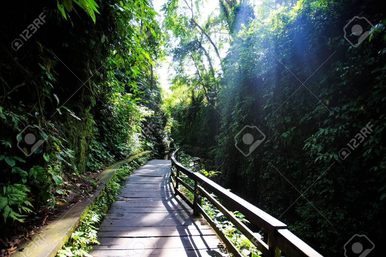 Monkey Forest Ubud - 39387450