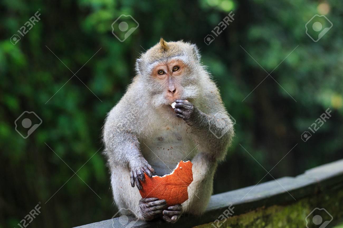 Monkey - 39387451