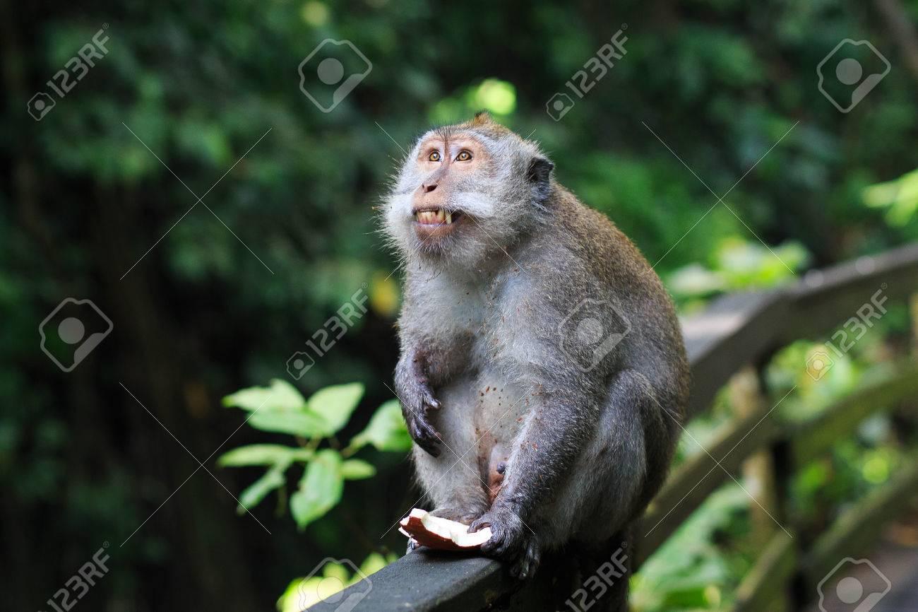 Monkey - 39387452
