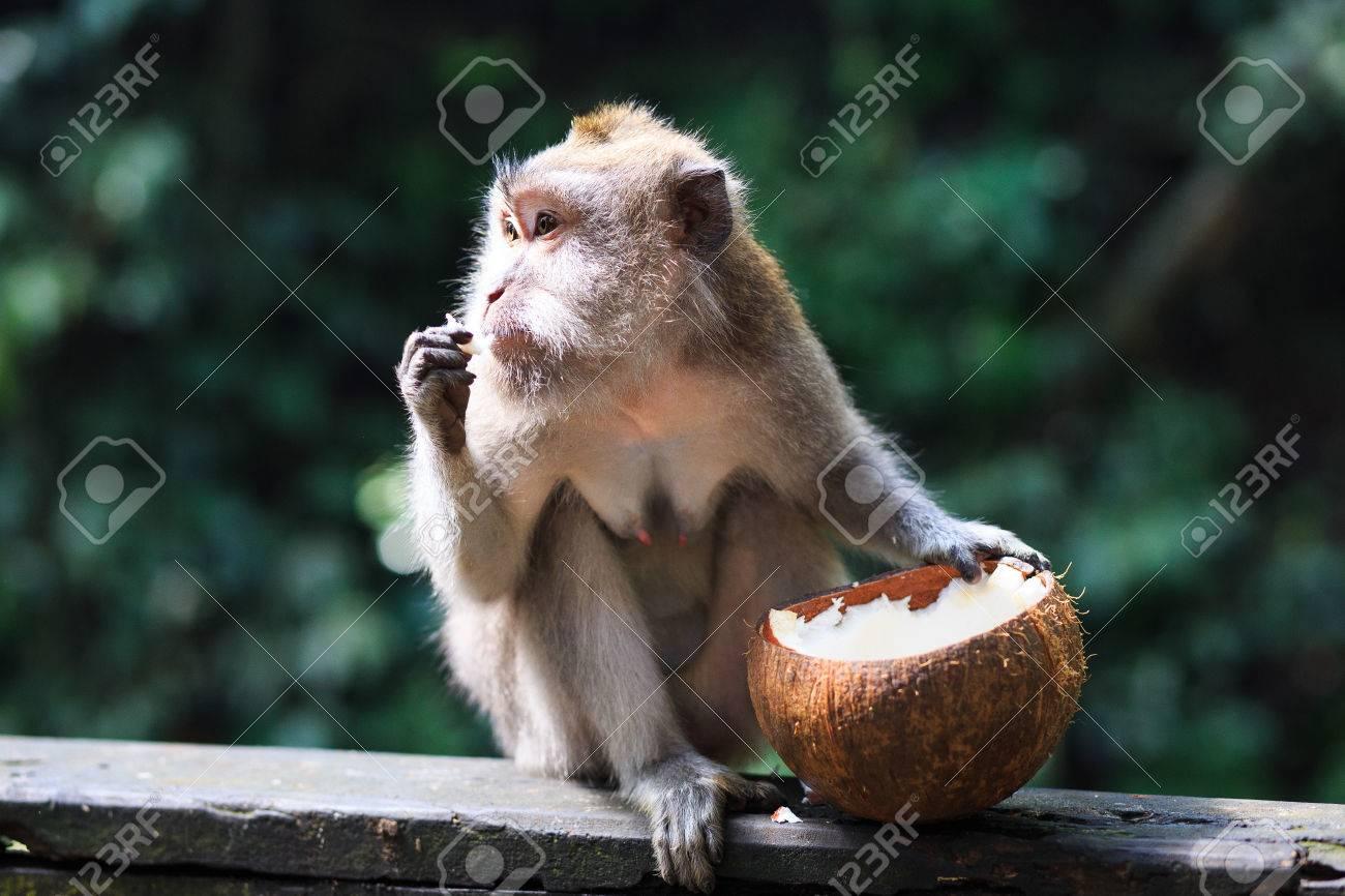 Monkey - 39387395