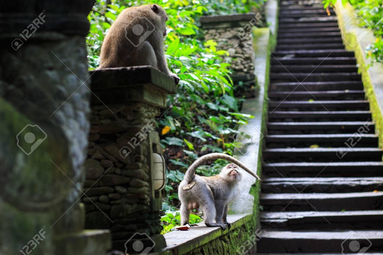 Monkey - 39387392