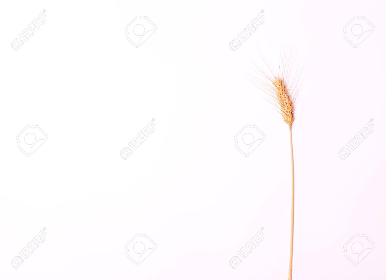 Ear on white background. Spike. Isolated background. - 85933260