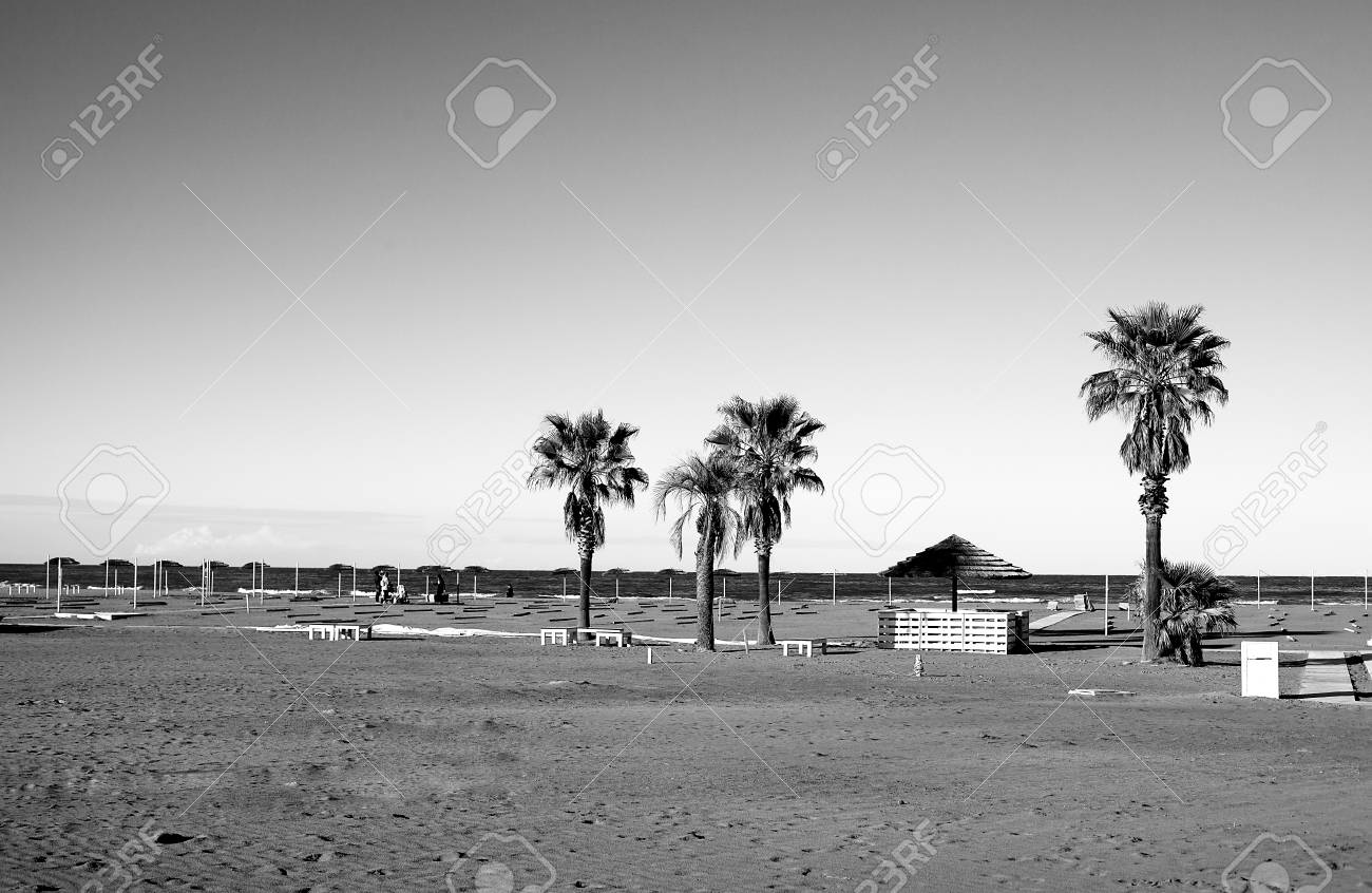 Deserted beach in autumn or spring and palm trees on it. - 92668803