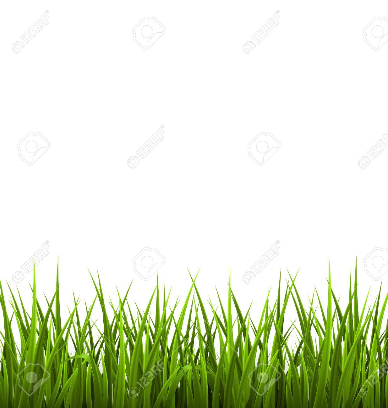 緑の草の芝生は、白で隔離。春、...
