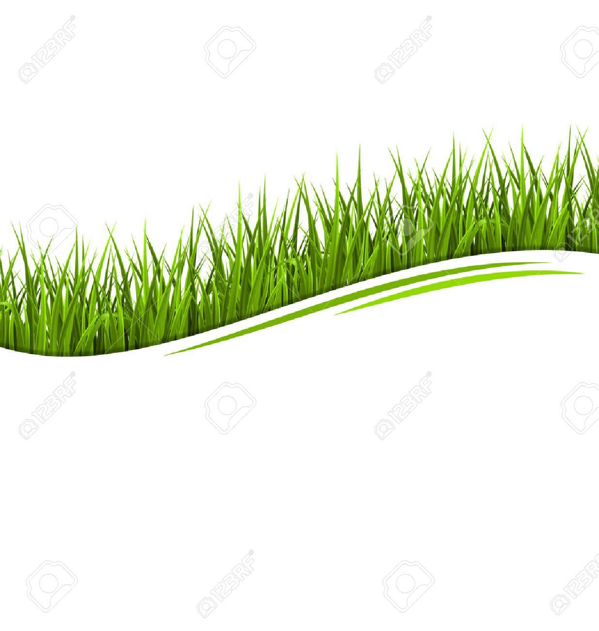 Green grass lawn wave isolated on white. Floral eco nature background - 37832827