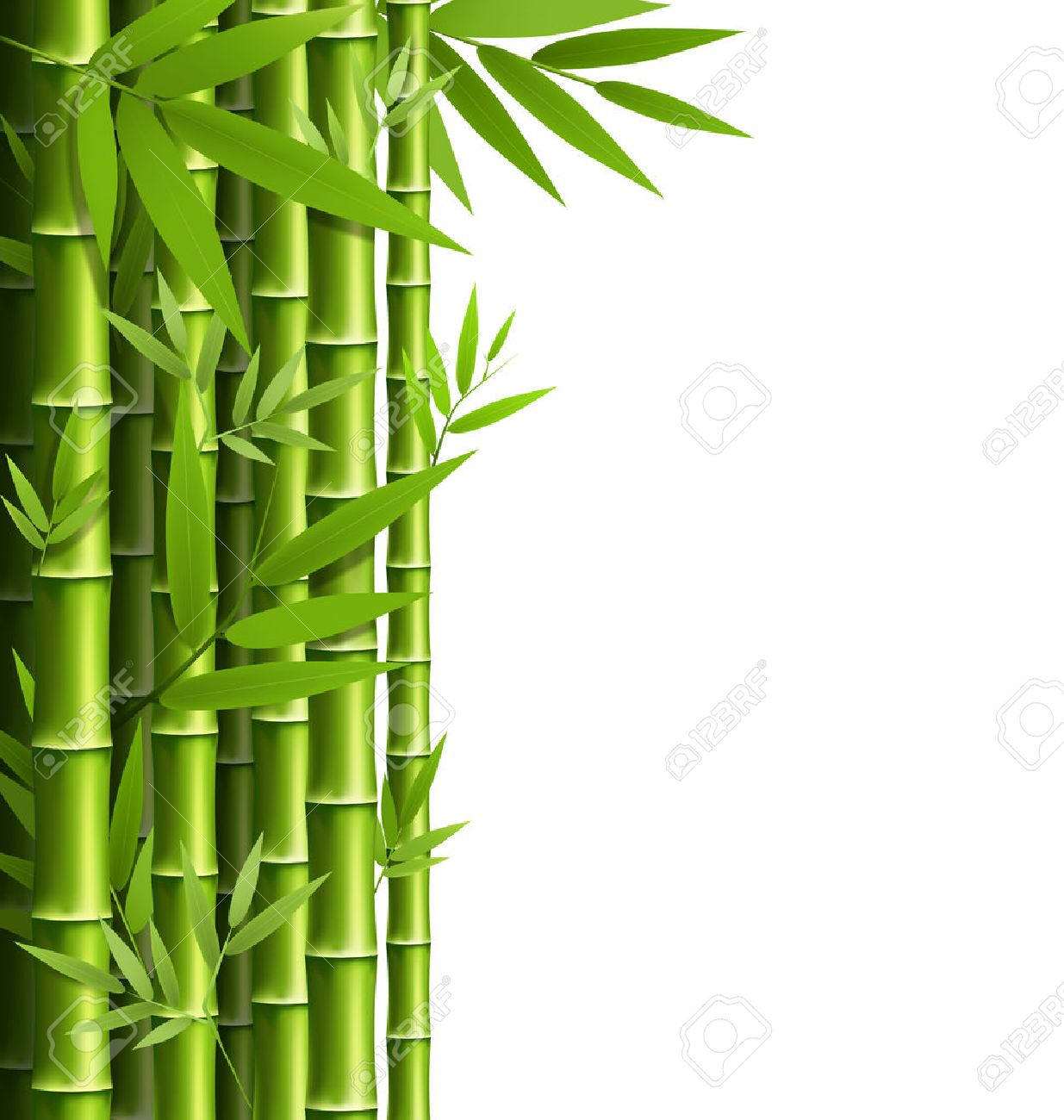 Green bamboo grove isolated on white background - 38424762