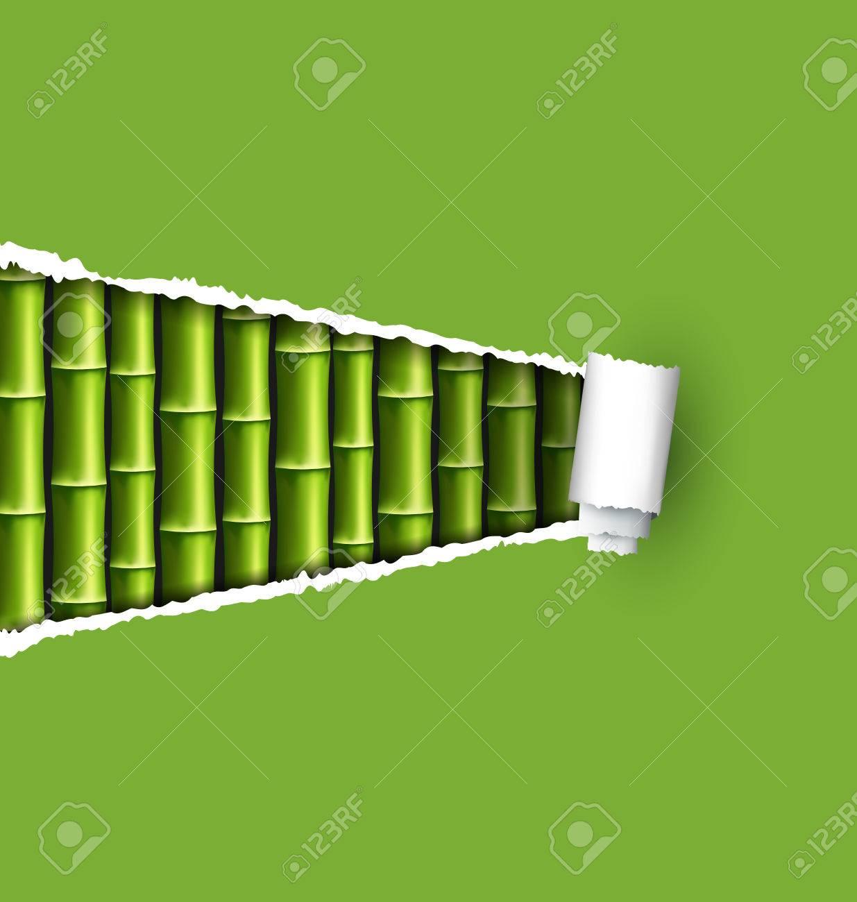 Grune Bambushain Mit Zerrissenen Papier Rahmen Isoliert Auf Weissem