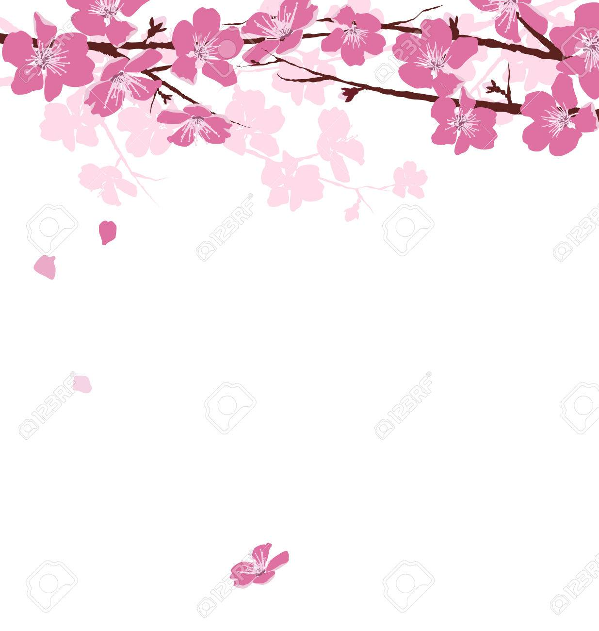 Branches with pink flowers isolated on white background - 38551313