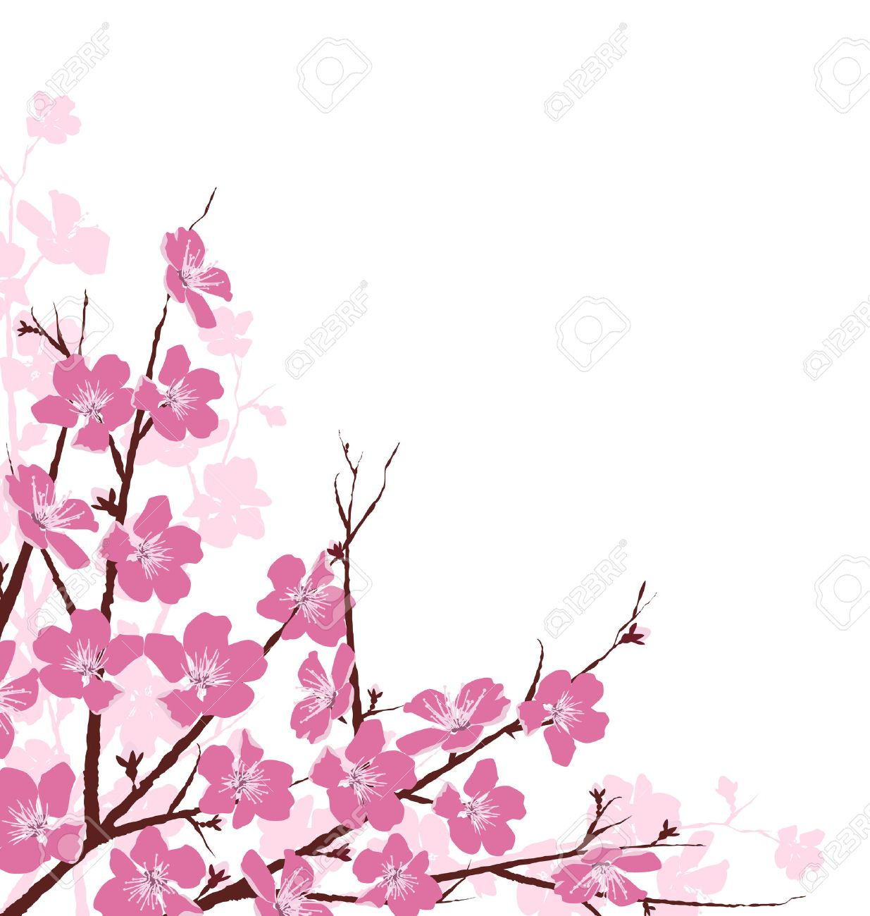 Branches with Pink Flowers Isolated on White Background - 42528687