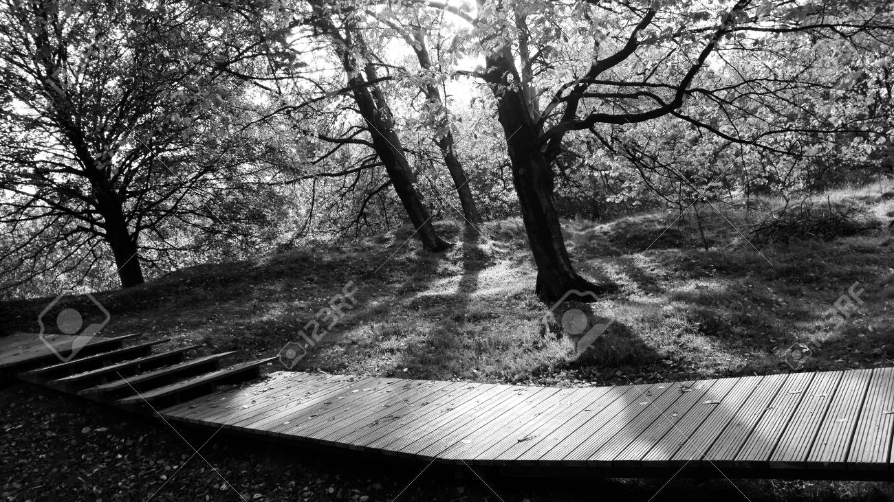 Moody black and white wooded walkwaay