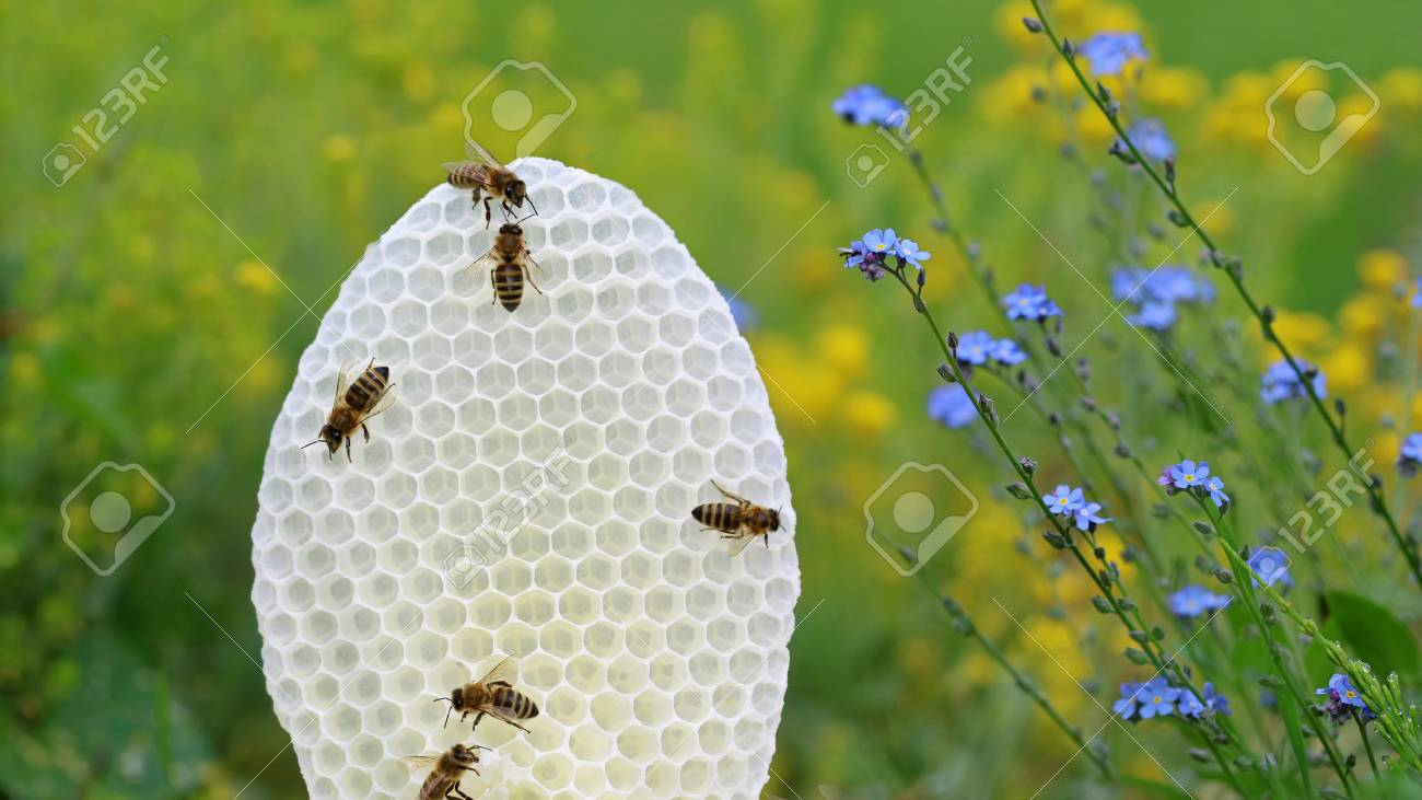 Round White Honeycomb With Bees On Yellow And Blue Flowers