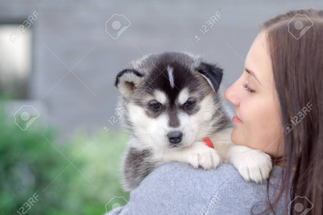 Smiling Woman Holding Cute Husky Puppy Stock Photo Picture And Royalty Free Image Image 85940782