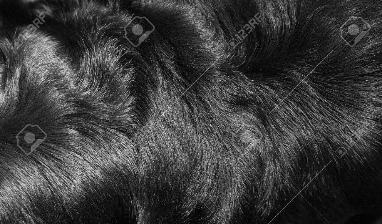 Structure of fur of a dog of breed a Rottweiler - 6180735