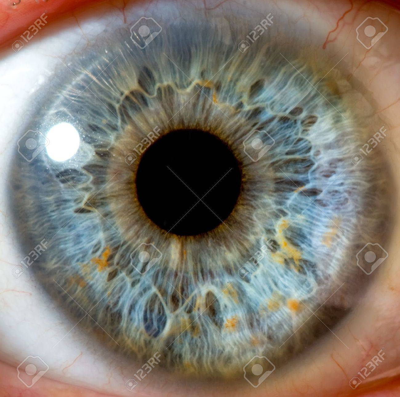 eye macro Stock Photo - 8050355