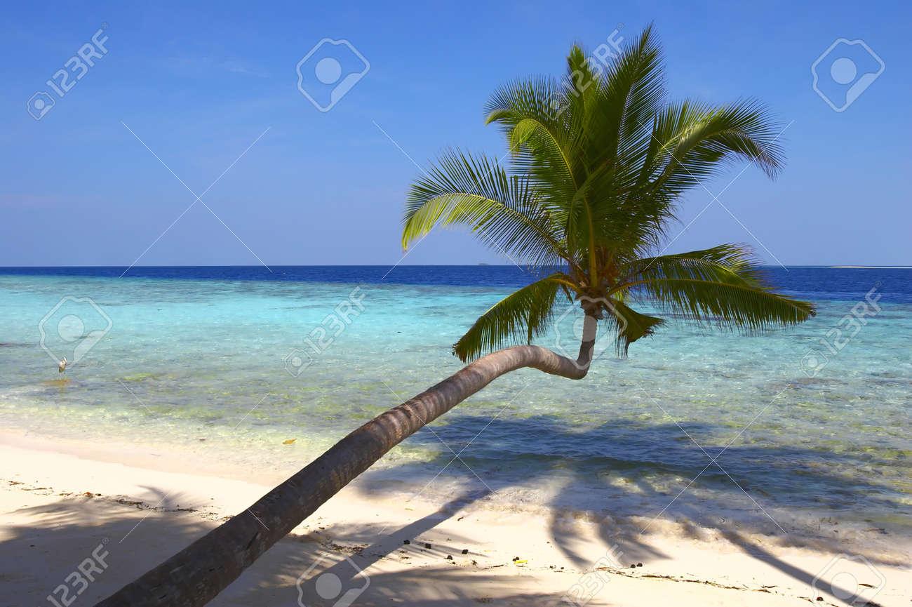 BEAUTIFUL BEACH WITH PALM TREE IN INDIAN OCEAN, MALDIVE ISLAND, FILITEYO Stock Photo - 1385368