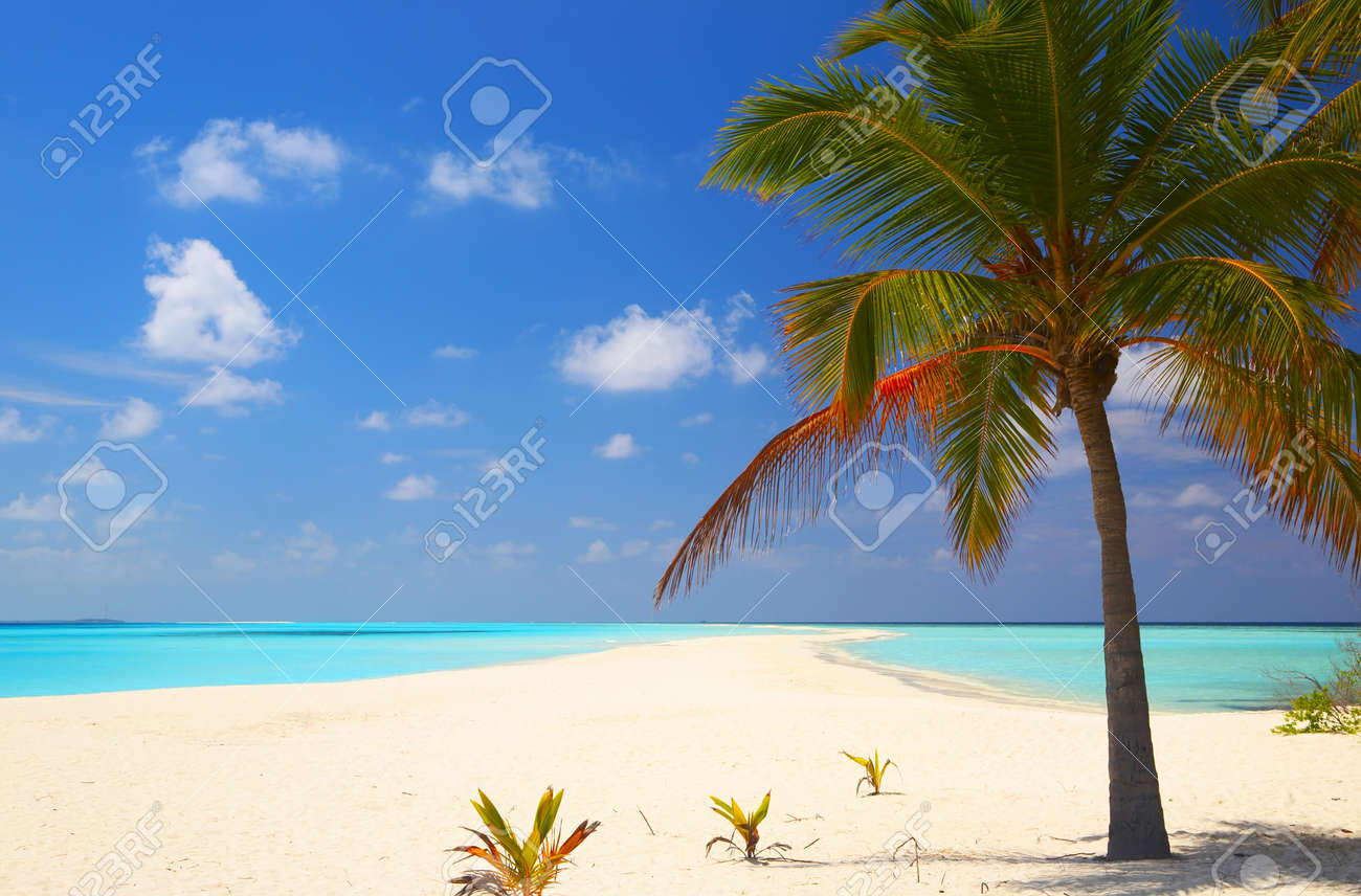 Tropical beach on the island Kuredu in the Indian Ocean, Maldives - 13103190