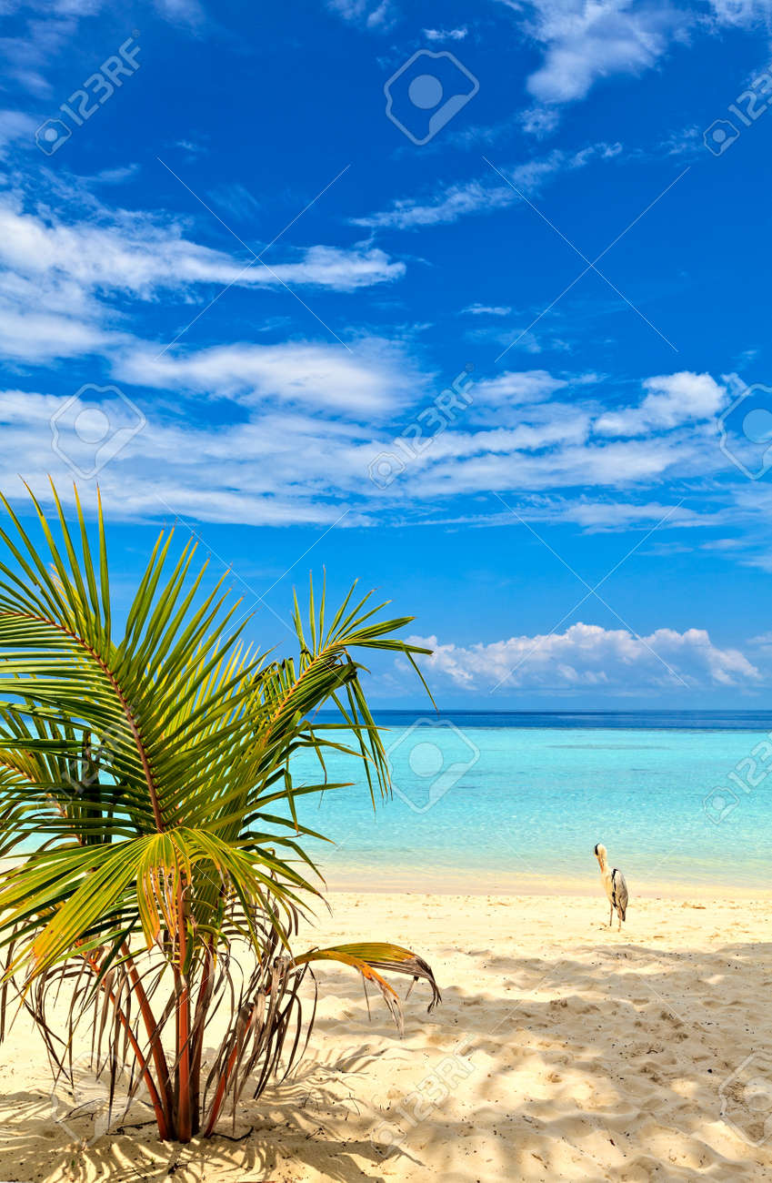 Beach with small palm tree, and bird, Maldives, The Indian Ocean Stock Photo - 18989139