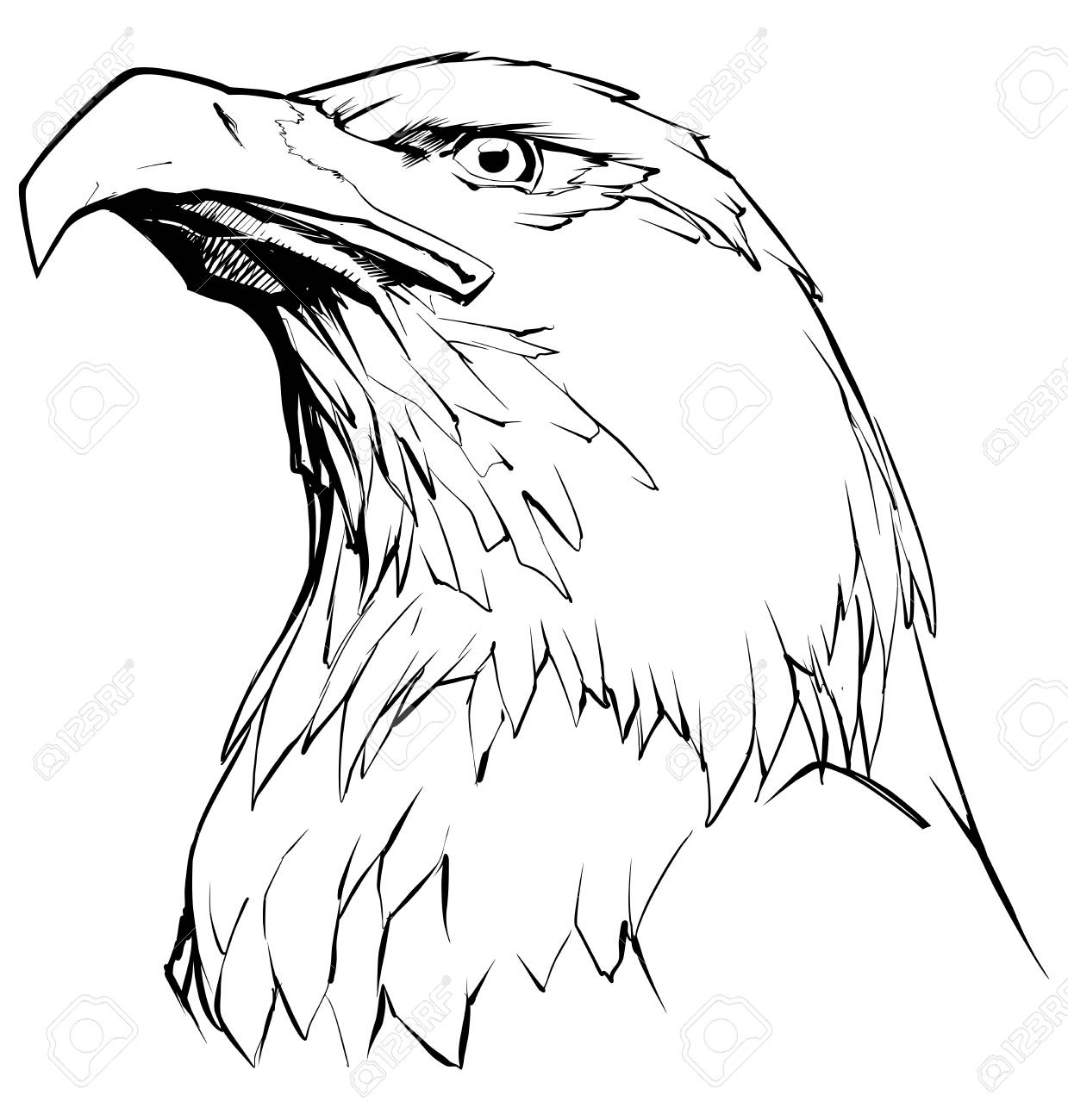 Illustration of north american bald eagle in black and white stock vector 105719181