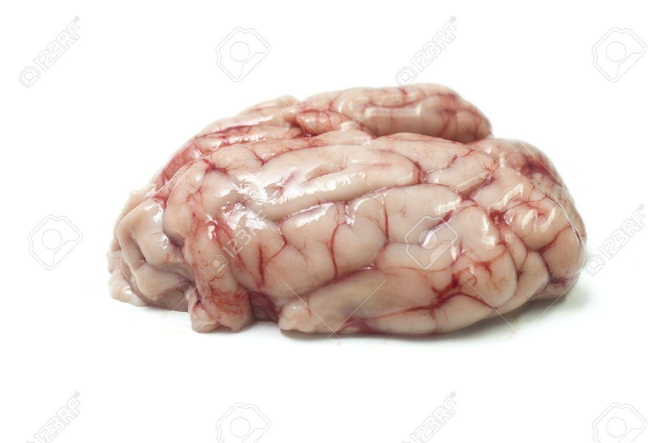 Isolated Pig Brains Stock Photo Picture And Royalty Free Image