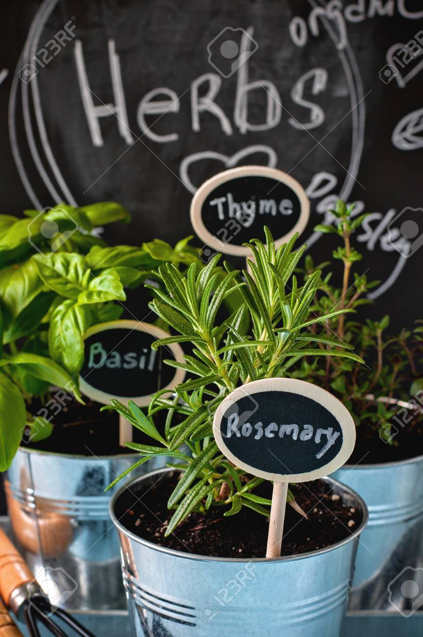 Herb Garden Thyme Rosemary And Basil In Pots Gardening Tools