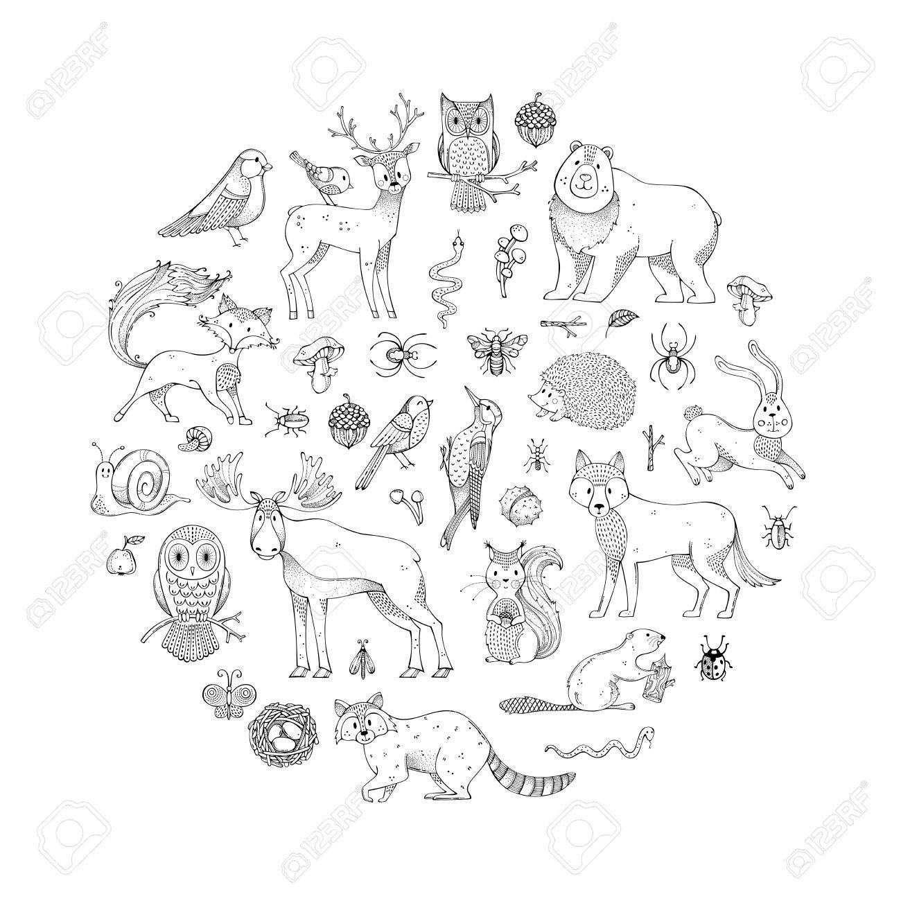 Dibujado A Mano Zorro, Lobo, Búho, Liebre, Ardilla, Alce, Venado ...