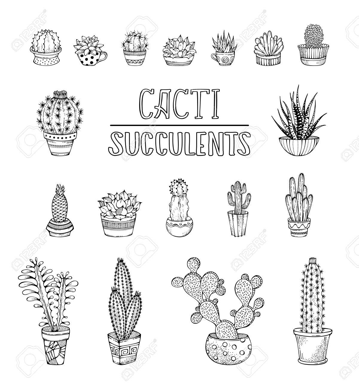 Vettoriale Cactus E Piante Grasse Disegnati A Mano In Vasi Da
