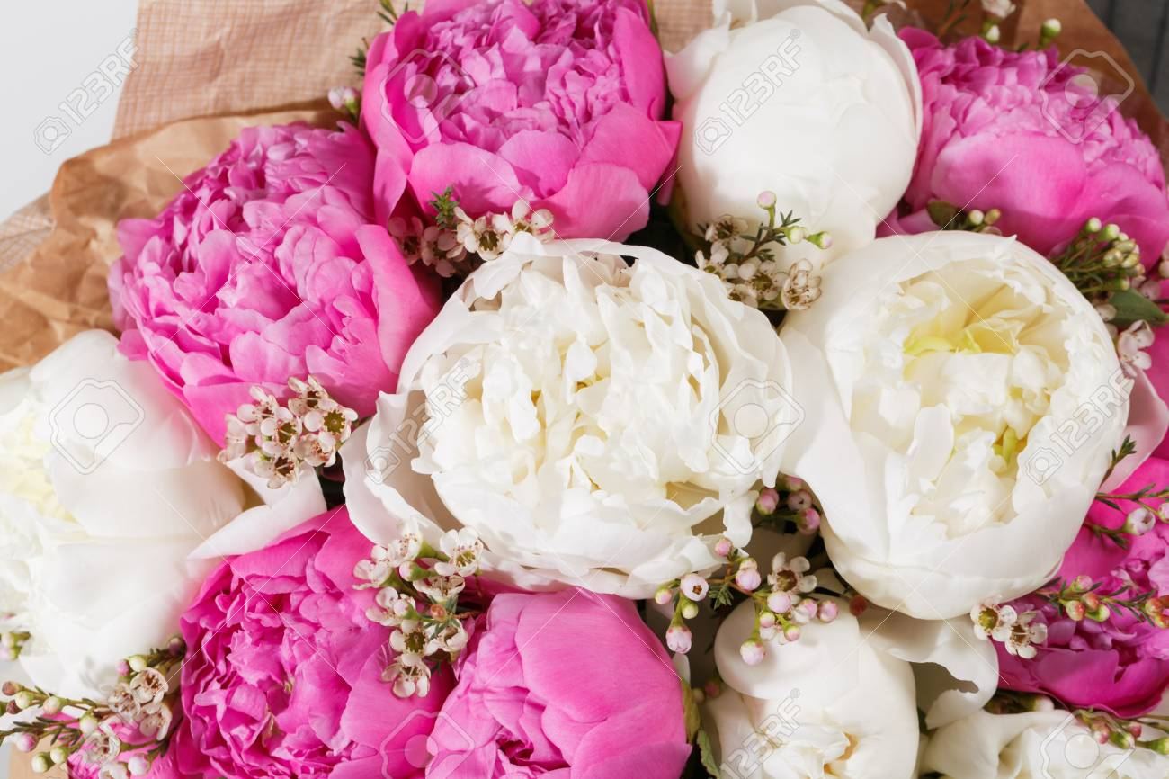 Fresh Bright Blooming Peonies Flowers On White Background White