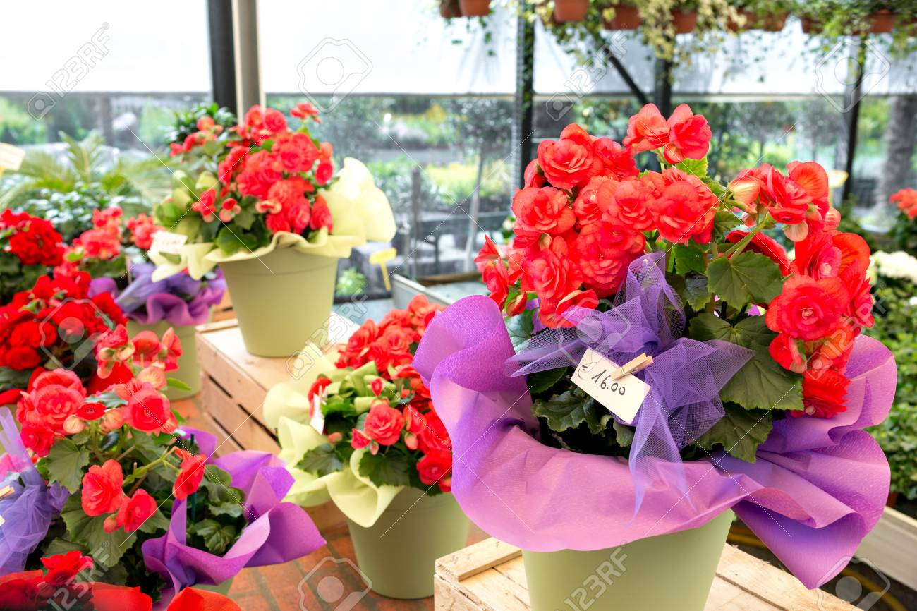 123RF.com & Flower shop outdoor stand with colorful flower pots