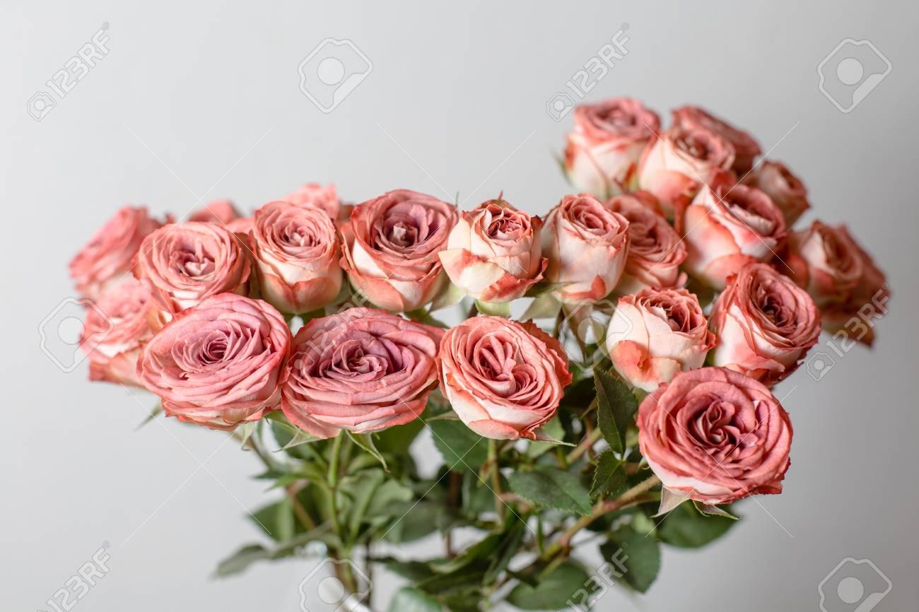 Couleur Rose Poudre Branche De Fleurs A Augmente Bourgeons Close