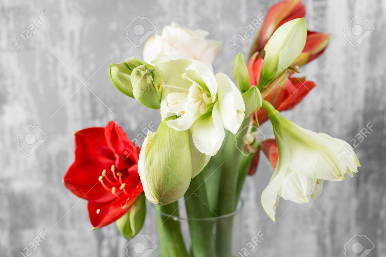 Winter flowers. Amaryllis in a vase watering can standing on a wooden table. On the background old gray wall art. - 90925124
