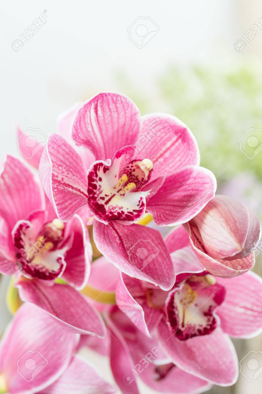 Pink Orchid Flower On Light Background Light Pastel Poster With