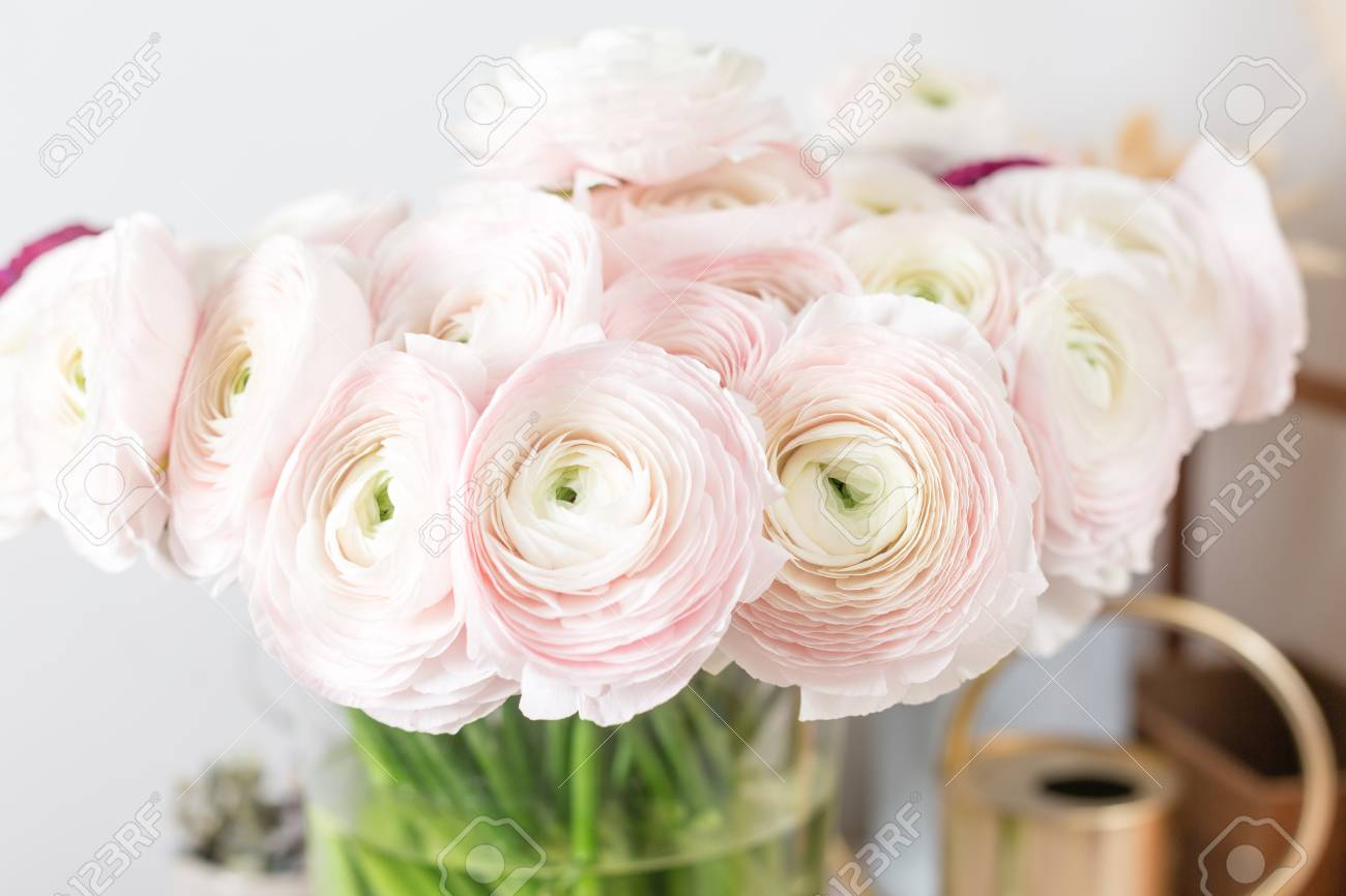 Bunch pale pink ranunculus flowers light background. Glass vase on pink vintage & Persian Buttercup. Bunch Pale Pink Ranunculus Flowers Light ...
