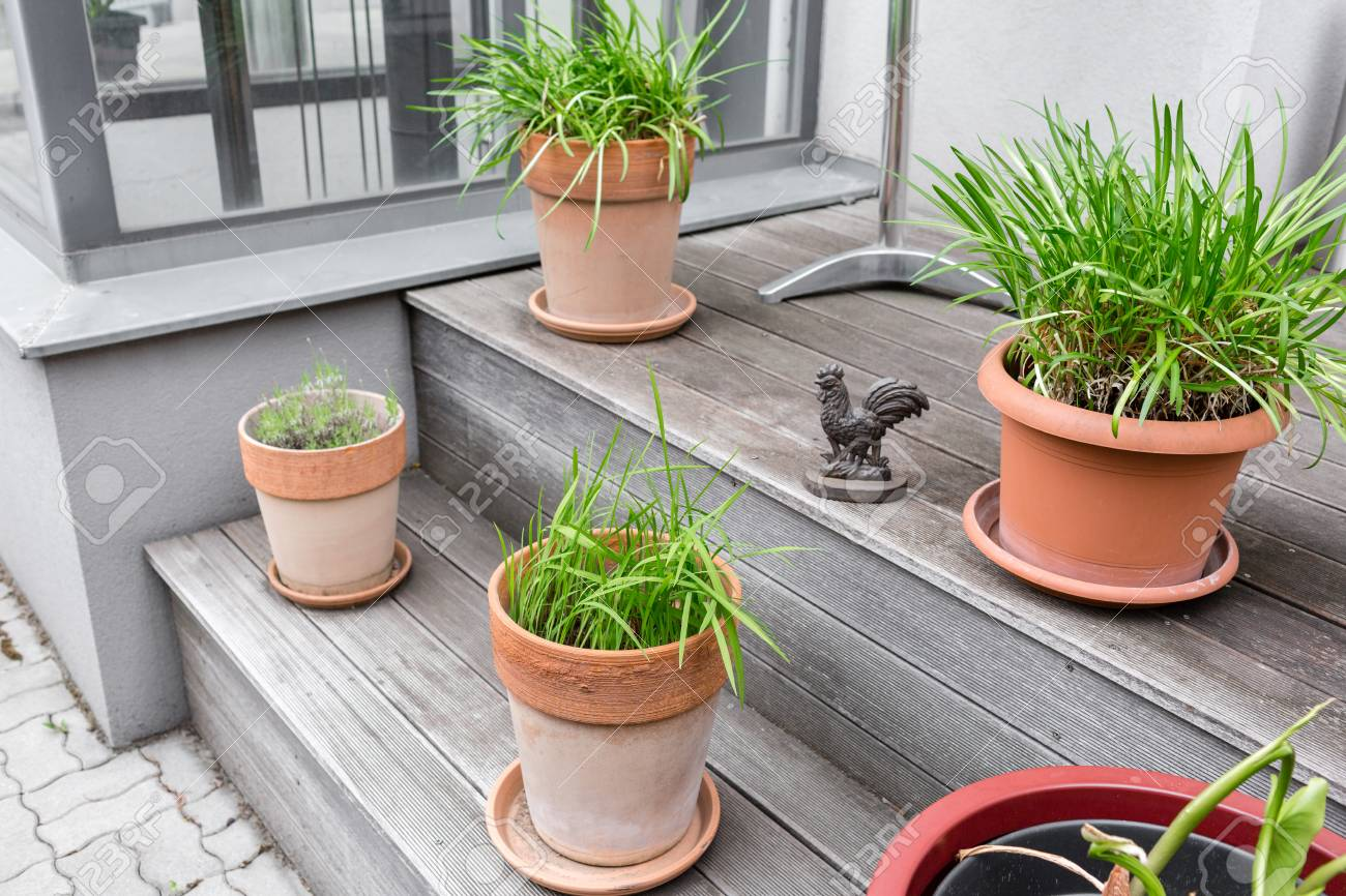 Green Plants In Pots Outdoor On The Summer Patio Small Townhouse Stock Photo Picture And Royalty Free Image Image 98281146