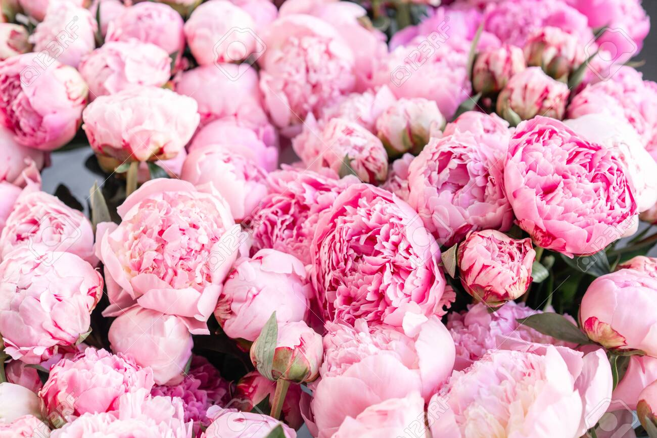 Floral Carpet Or Wallpaper Background Of Pink Peonies Morning Stock Photo Picture And Royalty Free Image Image 124895980
