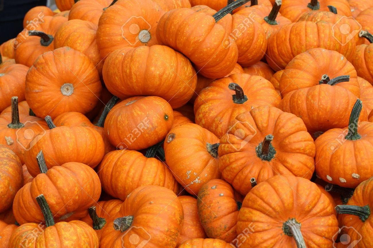 Pumpkins. Multicolored decorative pumpkins on autumn festival. Standard-Bild - 47294145