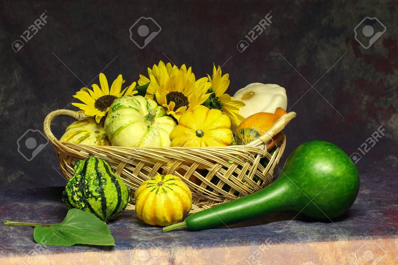 Herbst Stillleben / Verschiedene dekorative Kürbisse auf dem Tisch Standard-Bild - 86671730