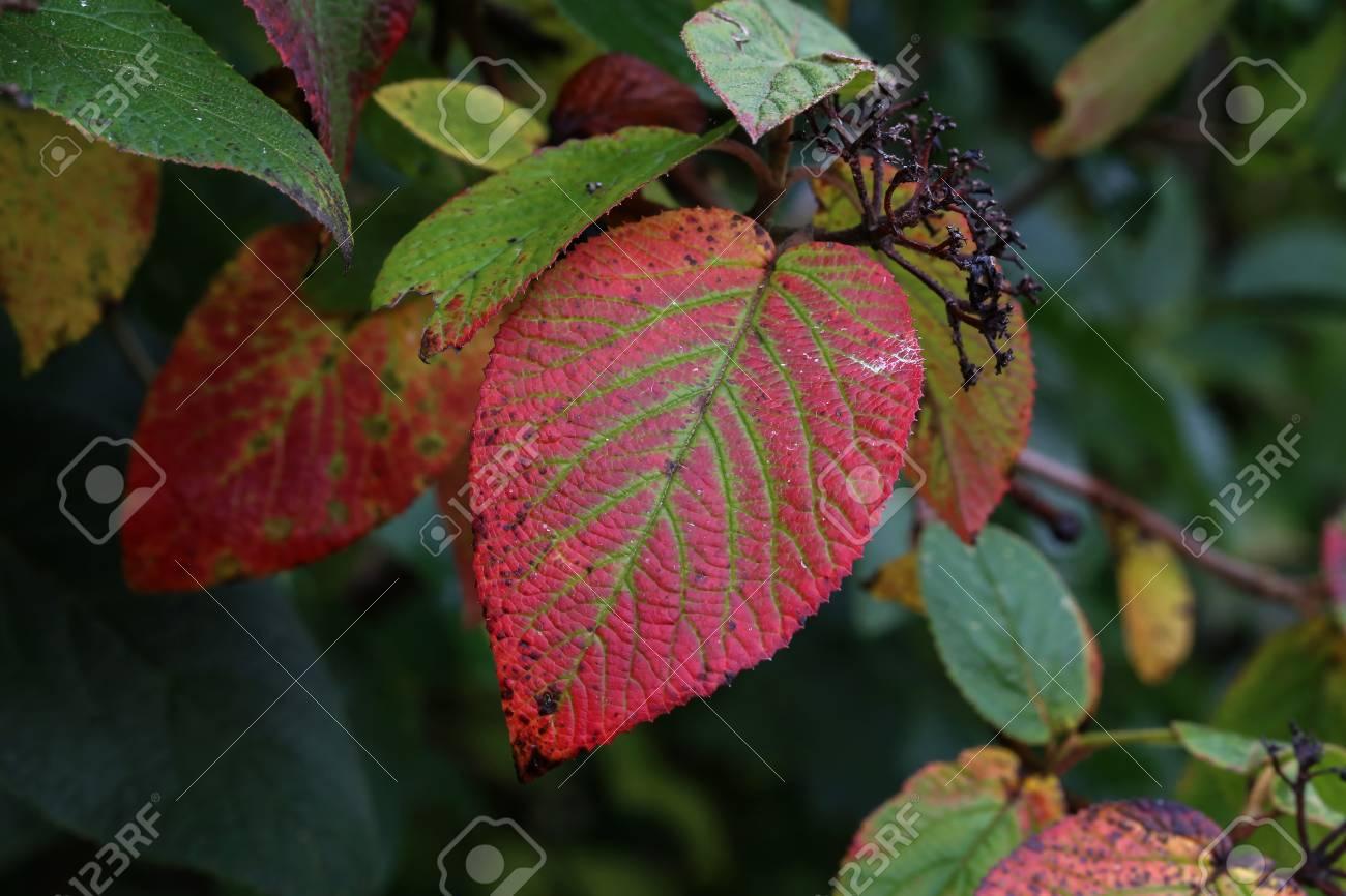Autumn red leaves Standard-Bild - 87965248