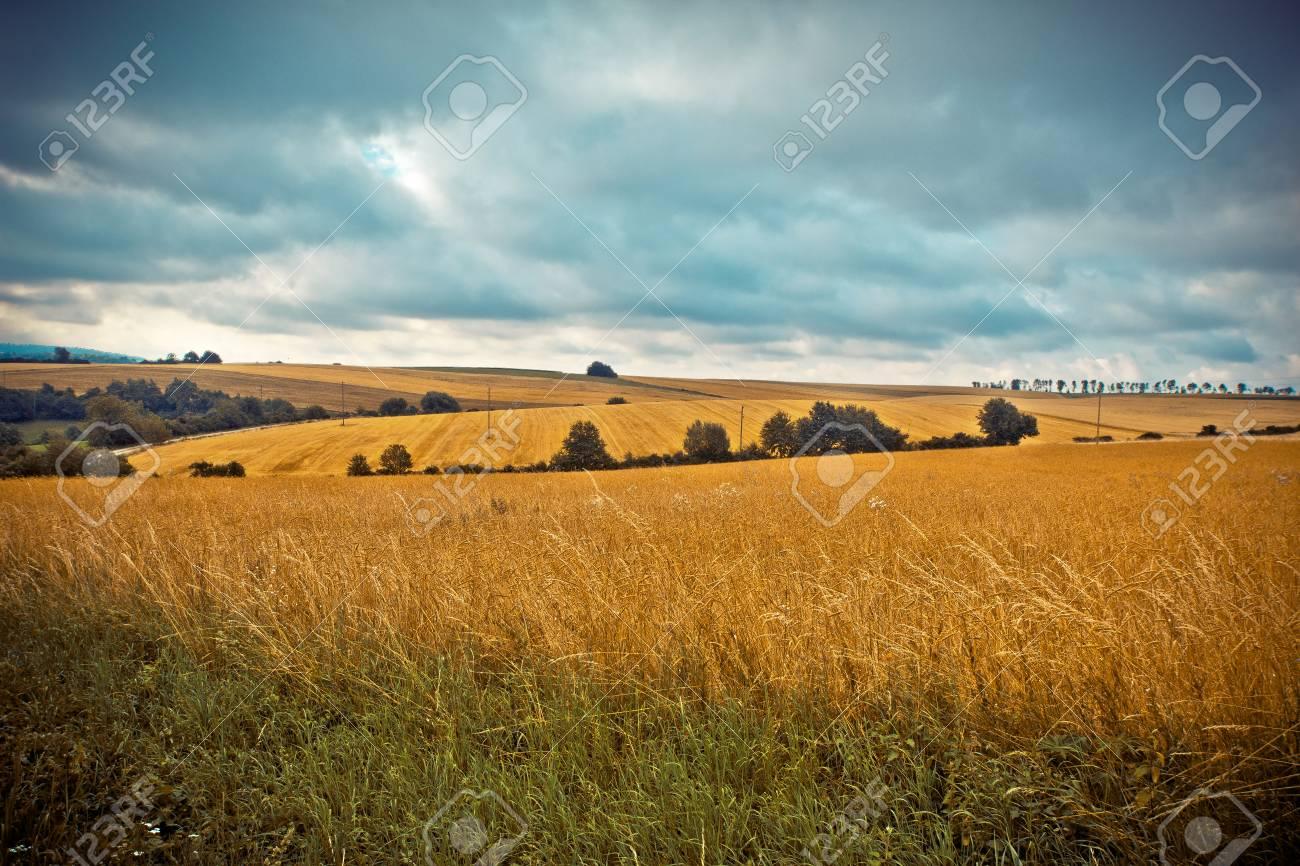 Ländliche Landschaft Felder mit reifem Weizen Standard-Bild - 88025825