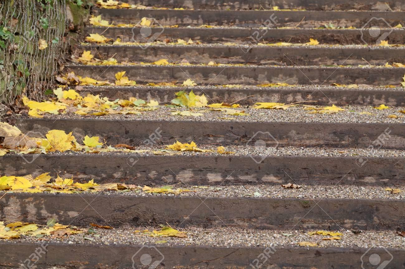 Autumn leaves lying on the asphalt Standard-Bild - 92993603