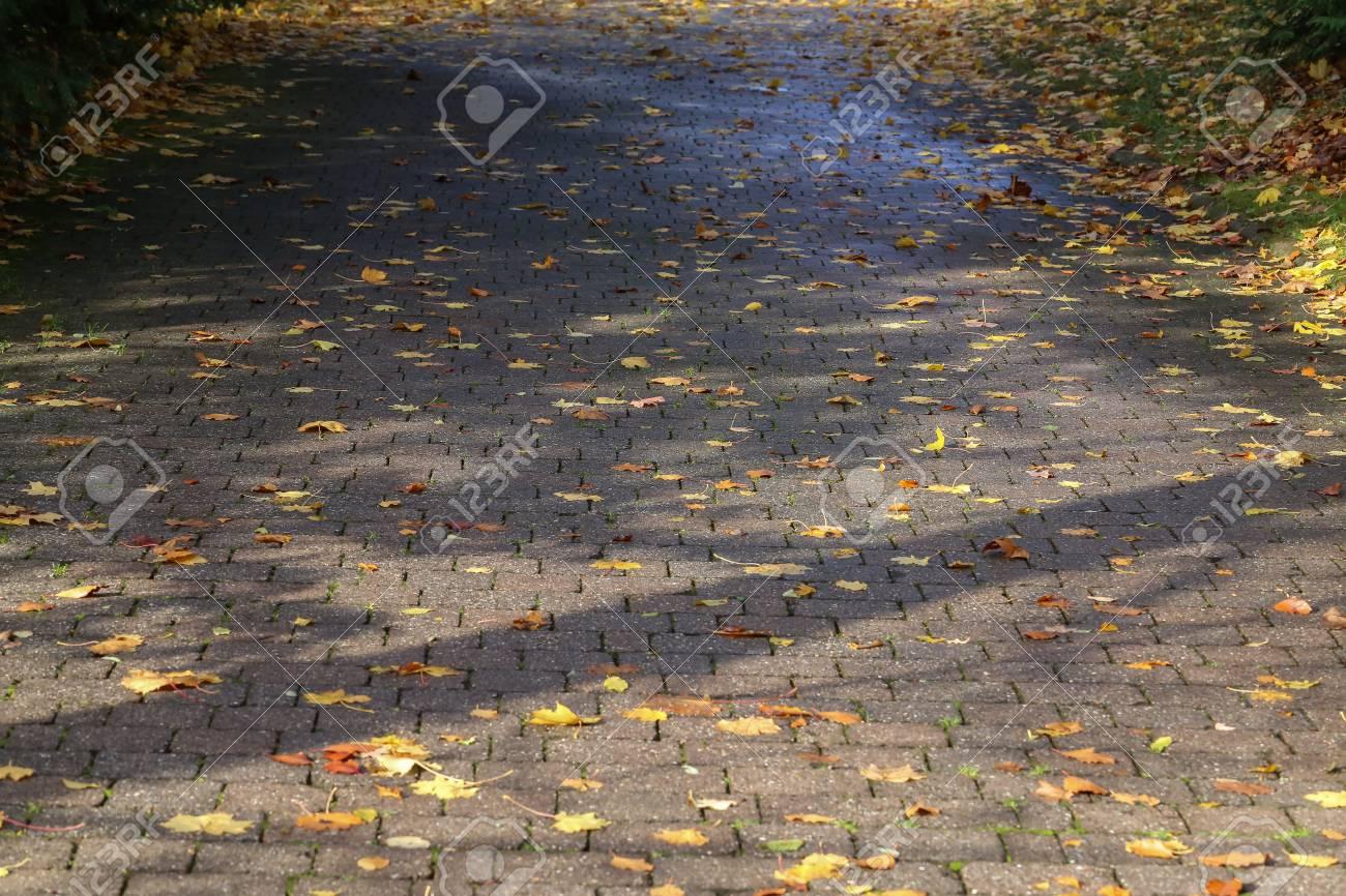 Autumn leaves lying on the asphalt Standard-Bild - 92993604