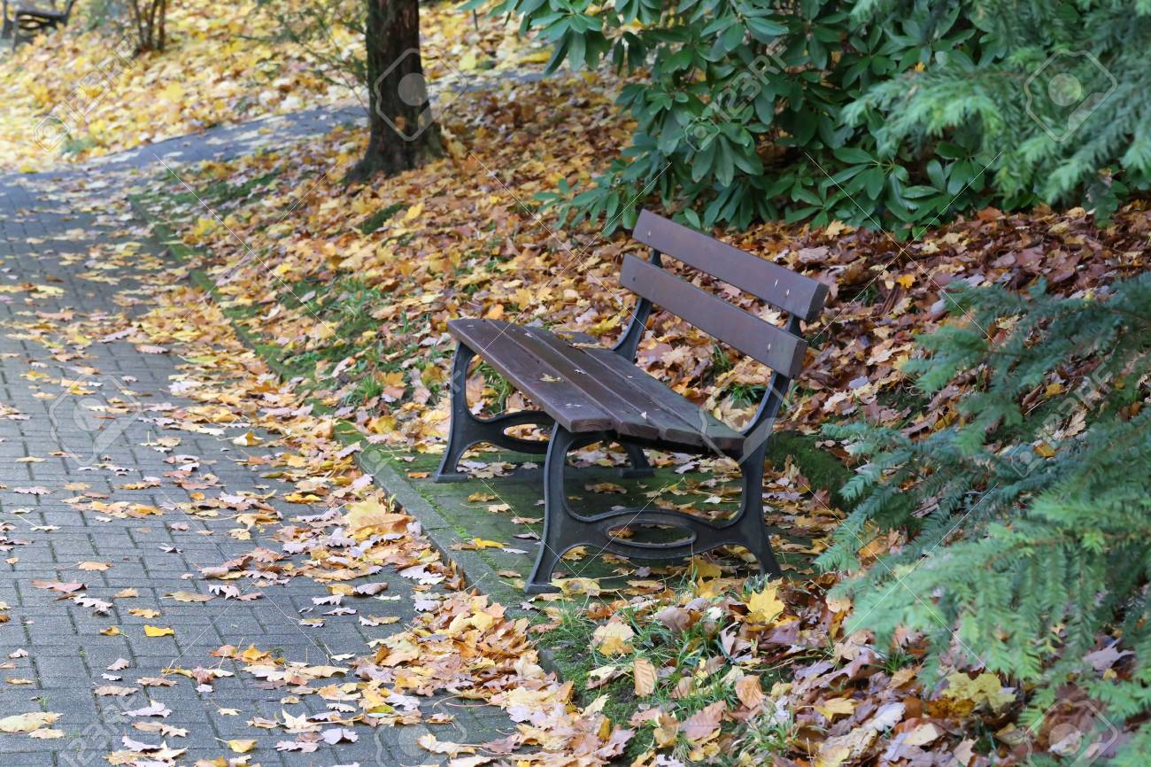 Autumn in the park leaves on a bench Standard-Bild - 92993608