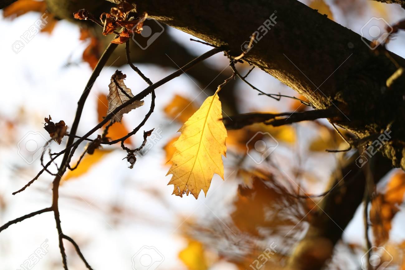 Autumn Standard-Bild - 92928887