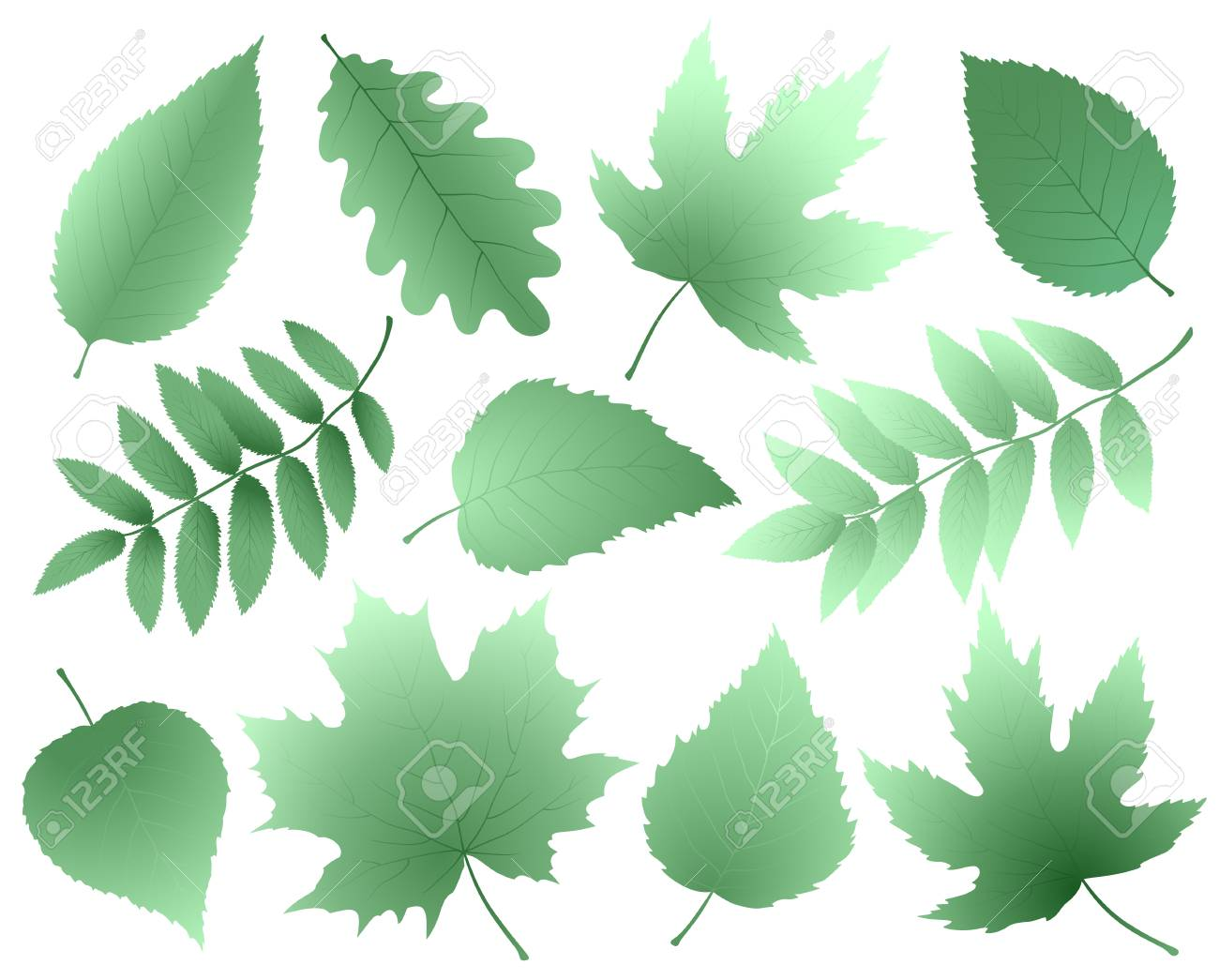 Leaves and branches silhouettes set - 95333413