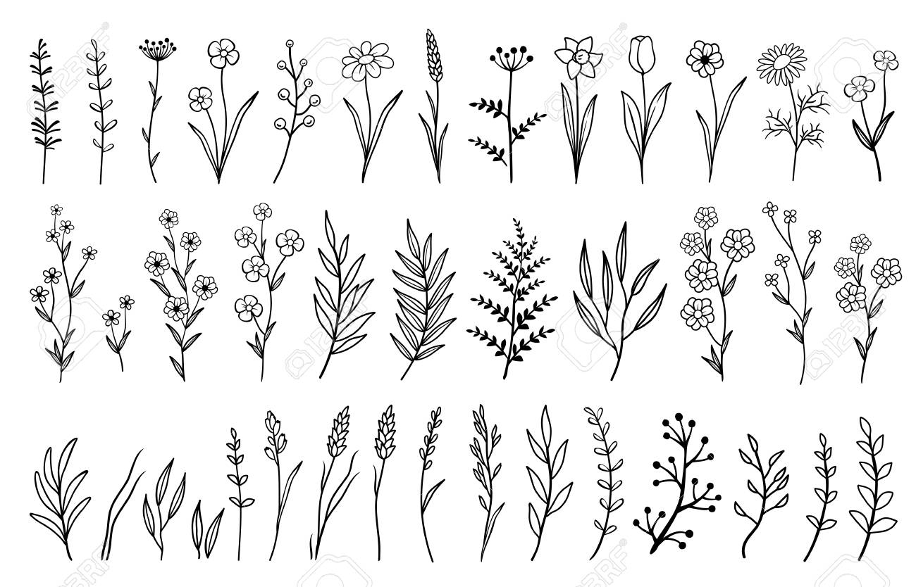 hand drawn isolated flowers and herbs - 107235797