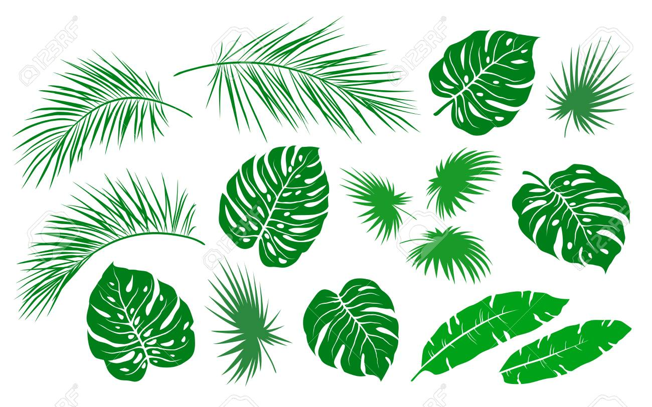 tropical green palm leaves and branches branches summer set on white background - 122899693