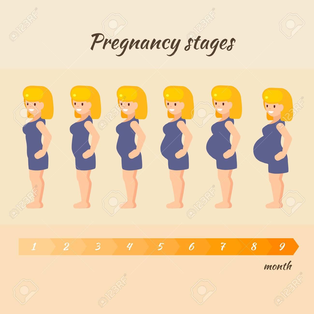 a181b61dd Etapas del embarazo de la mujer. Ilustración del vector de la mujer  embarazada en diferente